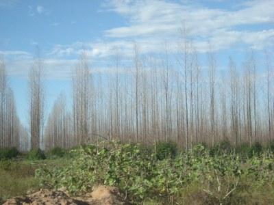 Brasilien: Offener Brief von NGOs und sozialen Bewegungen gegen Emissionshandel mit Wäldern als Kohlenstoffsenken
