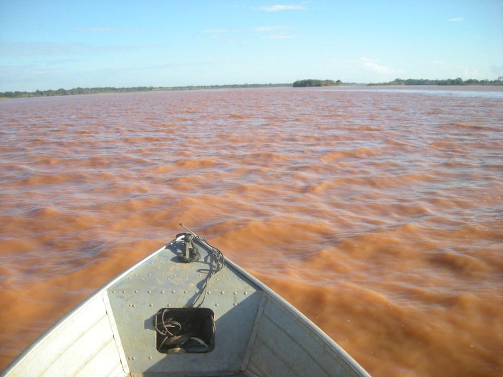 Fisch aus dem Rio Doce noch immer kontaminiert