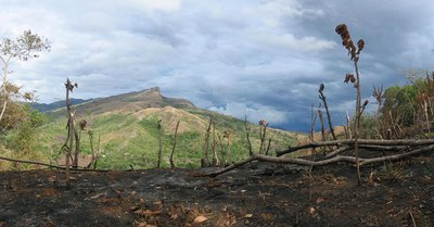 Tendenz steigend – Die neusten Entwaldungszahlen