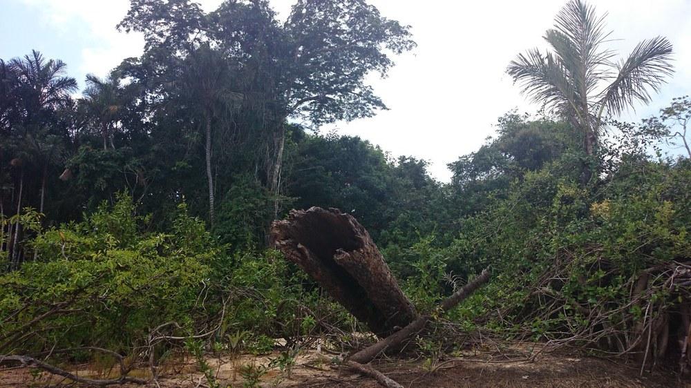Petition Rettet den Regenwald: 47.000 Quadratkilometer Amazonaswald retten!