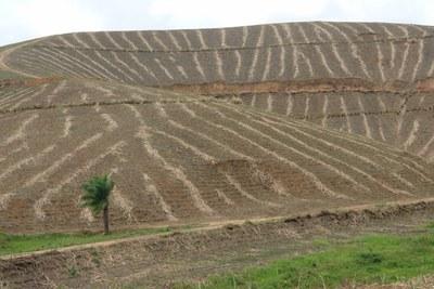 VW-Chef in Brasilien plädiert für Energiegewinnung aus Zuckerrohr zum Laden für Elektroautos